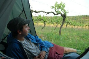 Camping by the vines